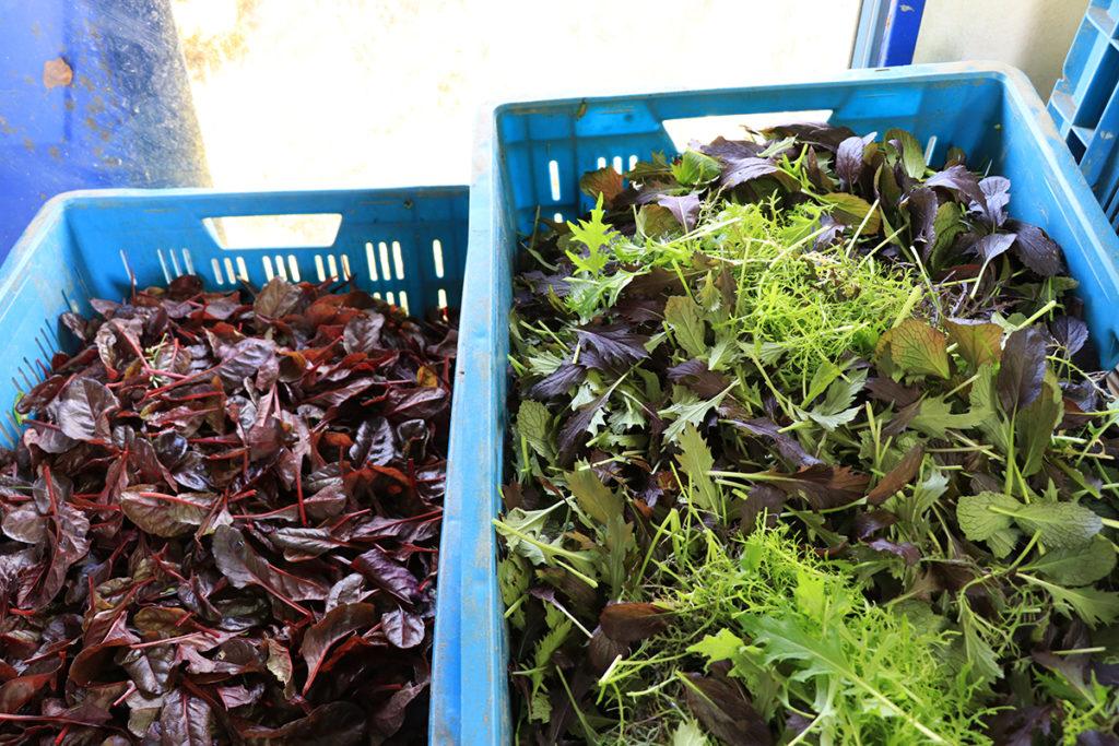 Irish Organic Farming